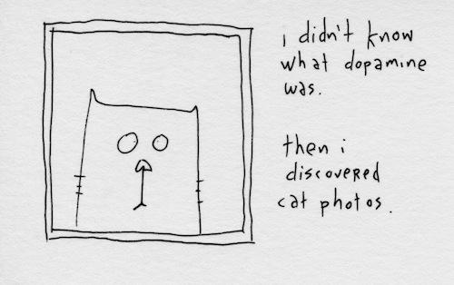 Cat picutes